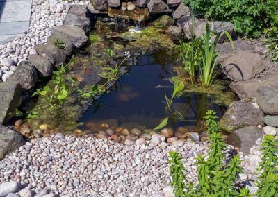 Small Wildlife Pond with Cascade